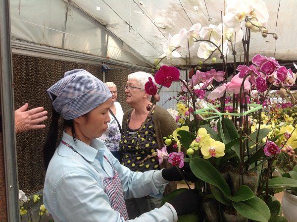Flower farm visit on best Vietnam holiday packages from Adelaide - Australia