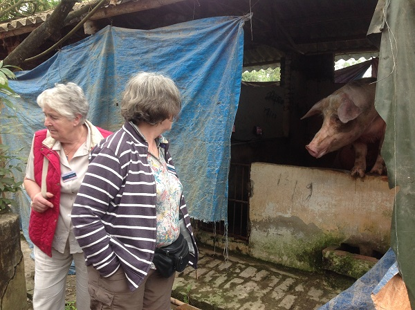 Pig farm visit on best vietnam holiday from uk