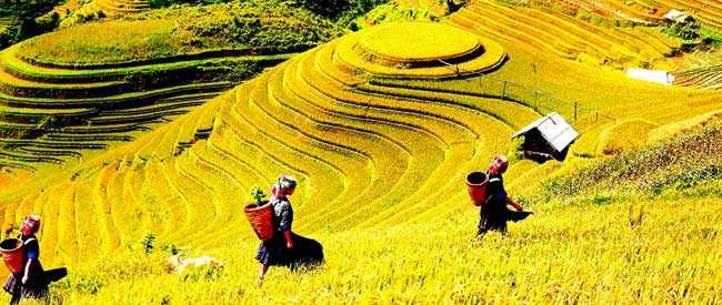tour sapa, see love market for the highlight of Sapa holiday