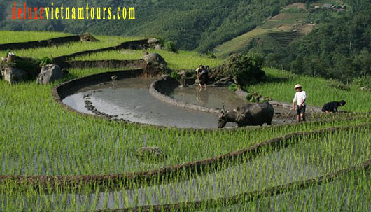 Amazing experience on Sapa tour package